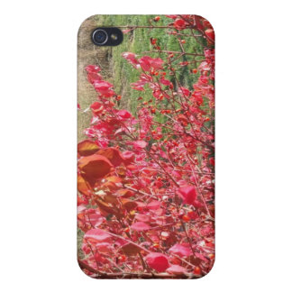 Feuille rouge coques iPhone 4/4S