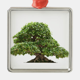 Ficus bonsai isolated metal ornament