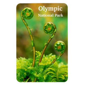 Fiddlehead Fern Olympic Magnet