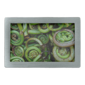 Fiddlehead Ferns Belt Buckle