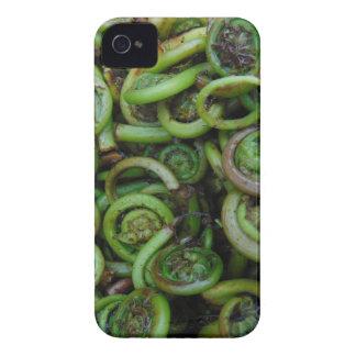 Fiddlehead Ferns iPhone 4 Case-Mate Case