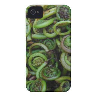 Fiddlehead Ferns iPhone 4 Cover