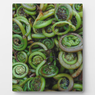 Fiddlehead Ferns Plaque