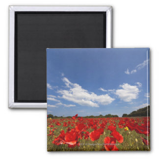 Field Full Of Red Flowers Square Magnet