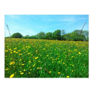 Field Meadow Postcard