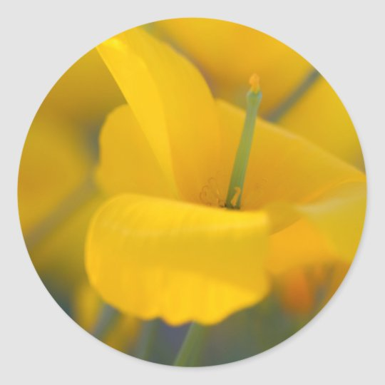 Field of blooming poppies classic round sticker