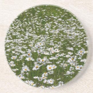 Field of Daisies Alaskan Wildflowers Coaster