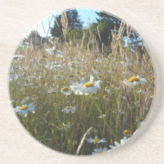 Field of Daisies Coaster
