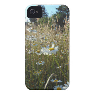 Field of Daisies iPhone 4 Cases