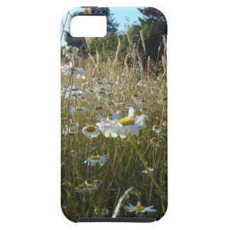 Field of Daisies iPhone 5 Case