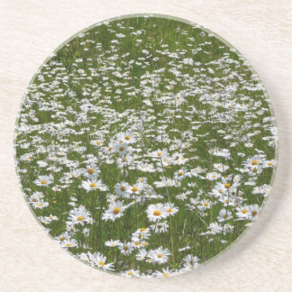 Field of Daisies Nature Photo Drink Coaster
