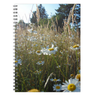 Field of Daisies Notebook