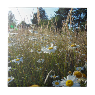 Field of Daisies Tile