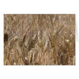 Field of ears of wheat card