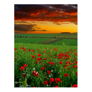 field of flowers postcard