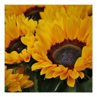 Field of Golden Sunflowers Print