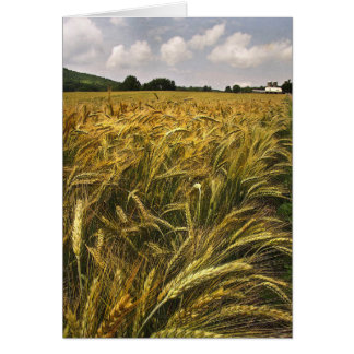 Field of Grain Card