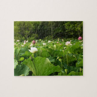 Field of Lotus Flowers Jigsaw Puzzle