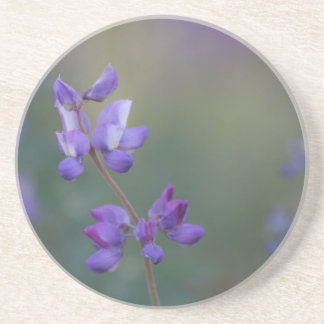 Field of Lupine Coaster