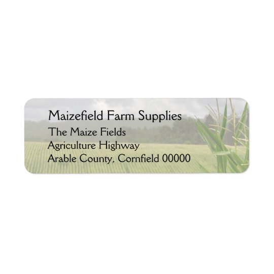 Field of maize landscape