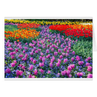 Field of pink hyacinths and red tulips card
