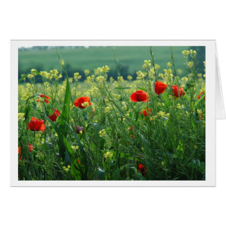 Field of Poppies Card