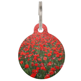 Field of Red Poppies Pet Tag