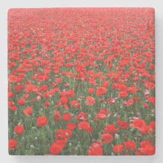 Field of Red Poppies Stone Coaster