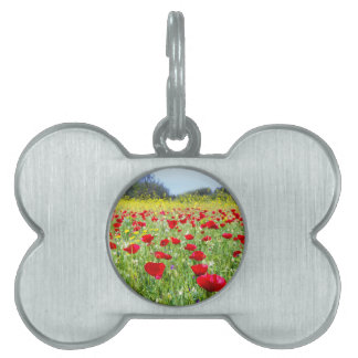 Field of red poppy flowers with yellow rapeseed pet ID tags