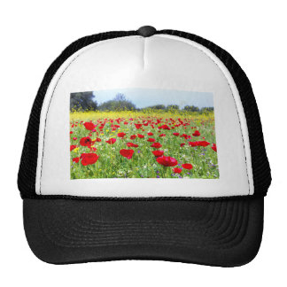 Field of red poppy flowers with yellow rapeseed trucker hat