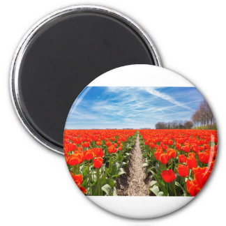 Field of red tulips flowers with blue sky 2 inch round magnet