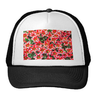 Field of red tulips from above trucker hat