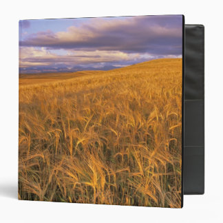 Field of Ripening Barley along the Rocky 3 Ring Binders