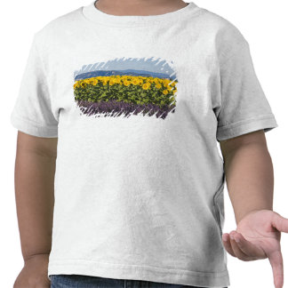Field of sunflowers and lavender flowers, tee shirts