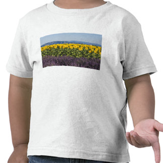 Field of sunflowers and lavender flowers, tee shirt