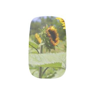 Field of Sunflowers Fingernail Decals