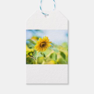 Field of Sunflowers Gift Tags