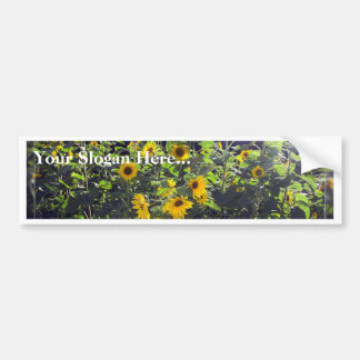 Field Of Sunflowers In Blossom Bumper Sticker