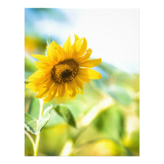Field of Sunflowers Letterhead