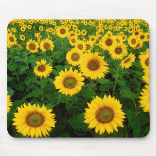 Field of Sunflowers Mousepads