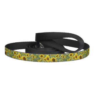 Field of Sunflowers Pet Leash