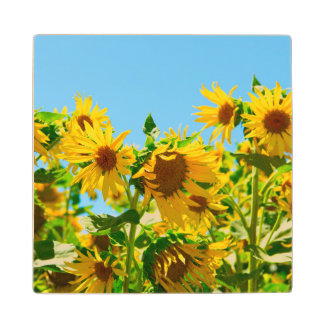Field of Sunflowers Photograph Maple Wood Coaster