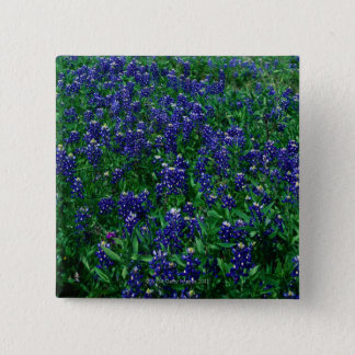 Field of Texas Bluebonnets 2 Inch Square Button
