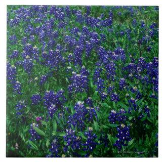 Field of Texas Bluebonnets Tile