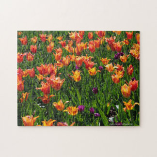 Field of Tulips Puzzle