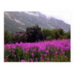 Field of wild flowers near Bodo, Norway