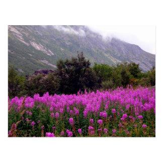 Field of wild flowers near Bodo, Norway Postcard