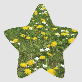 Field of Wildflowers Star Sticker