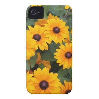 Field of yellow daisies iPhone 4 case