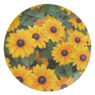 Field of yellow daisies plate